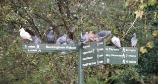 Vogel-Päuschen