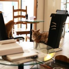 Katzencafe NEKO