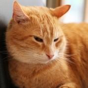 """Katzencafe NEKO - """"Thomas"""""""