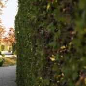 Garten Schloss Belvedere